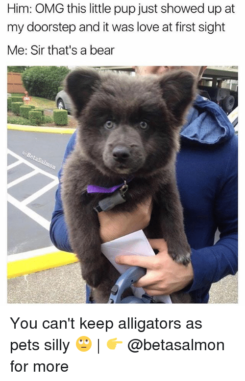 Love, Memes, and Omg: Him: OMG this little pup just showed up at  my doorstep and it was love at first sight  Me: Sir that's a bear You can't keep alligators as pets silly 🙄 | 👉 @betasalmon for more