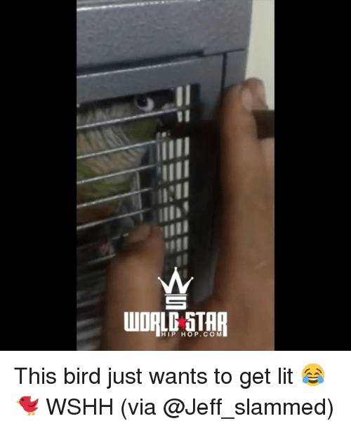 Lit, Memes, and Wshh: HIP HOP.CO M This bird just wants to get lit 😂🐦 WSHH (via @Jeff_slammed)