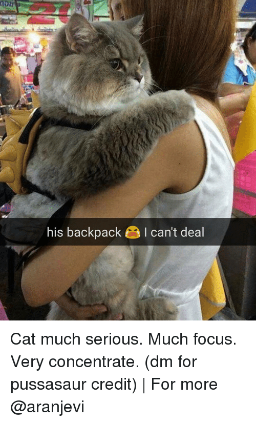 Backpacking: his backpack I can't deal Cat much serious. Much focus. Very concentrate. (dm for pussasaur credit) | For more @aranjevi