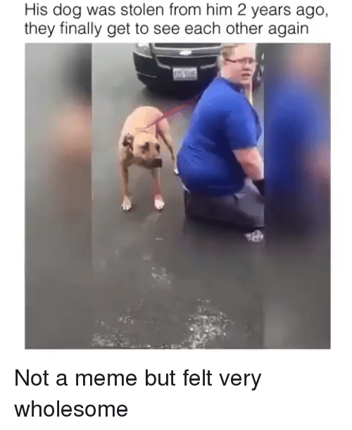 Meme, Wholesome, and Dog: His dog was stolen from him 2 years ago,  they finally get to see each other again Not a meme but felt very wholesome