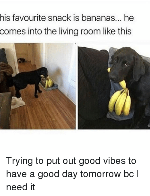 good vibe: his favourite snack is bananas... he  comes into the living room like this Trying to put out good vibes to have a good day tomorrow bc I need it