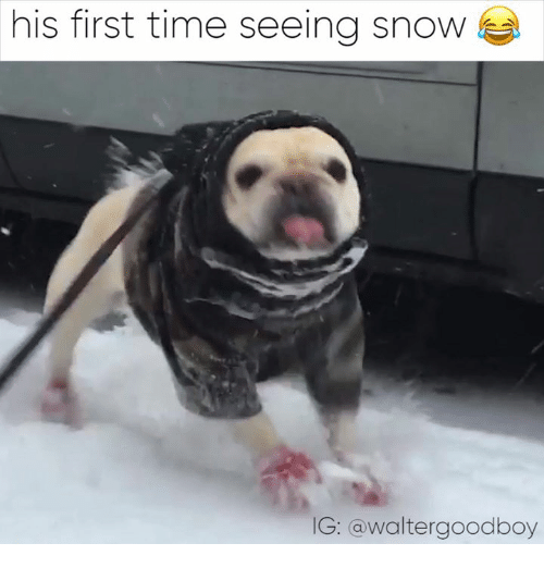 Memes, 🤖, and First: his first time seeing snow  G: a walter goodboy