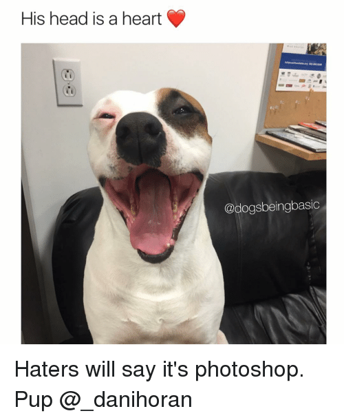 Head, Memes, and Photoshop: His head is a heart  @dogsbeingbasic Haters will say it's photoshop. Pup @_danihoran