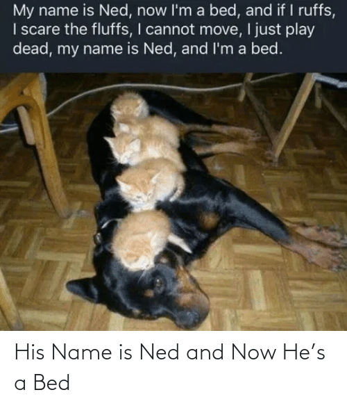 bed: His Name is Ned and Now He's a Bed