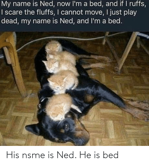 bed: His nsme is Ned. He is bed