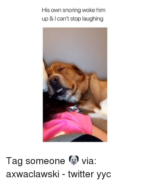 Memes, Twitter, and Tag Someone: His own snoring woke him  up & I can't stop laughing Tag someone 🐶 via: ‪axwaclawski‬ - twitter yyc