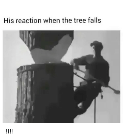 Memes, Tree, and 🤖: His reaction when the tree falls !!!!