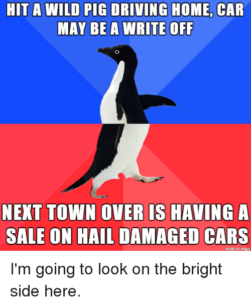 Pigly: HIT A WILD PIG DRIVING HOME, CAR  MAY BE A WRITE OFF  NEXT TOWN OVERIS HAVING A  SALE ON HAIL DAMAGED CARS  made on imgur I'm going to look on the bright side here.