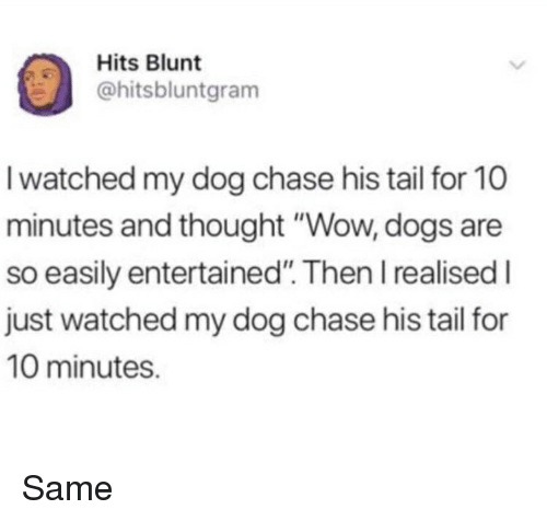 "Dogs, Funny, and Wow: Hits Blunt  hitsbluntgram  I watched my dog chase his tail for 10  minutes and thought ""Wow, dogs are  so easily entertained"". Then I realised I  just watched my dog chase his tail for  10 minutes. Same"