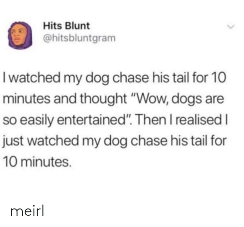 "Entertained: Hits Blunt  @hitsbluntgram  I watched my dog chase his tail for 10  minutes and thought ""Wow, dogs are  so easily entertained"". Then I realised I  just watched my dog chase his tail for  10 minutes. meirl"