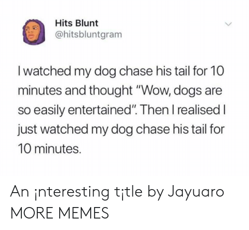 "Entertained: Hits Blunt  ohitsbluntgram  I watched my dog chase his tail for 10  minutes and thought ""Wow, dogs are  so easily entertained"". Then I realised I  just watched my dog chase his tail for  10 minutes. An ¡nteresting t¡tle by Jayuaro MORE MEMES"