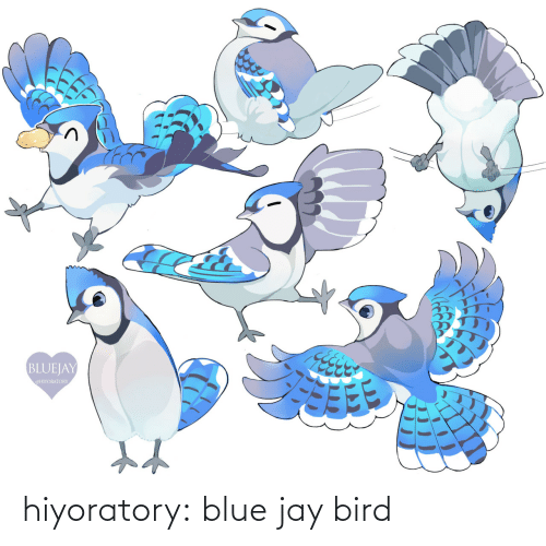 bird: hiyoratory:  blue jay bird