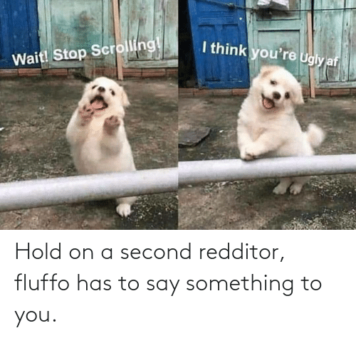 say something: Hold on a second redditor, fluffo has to say something to you.