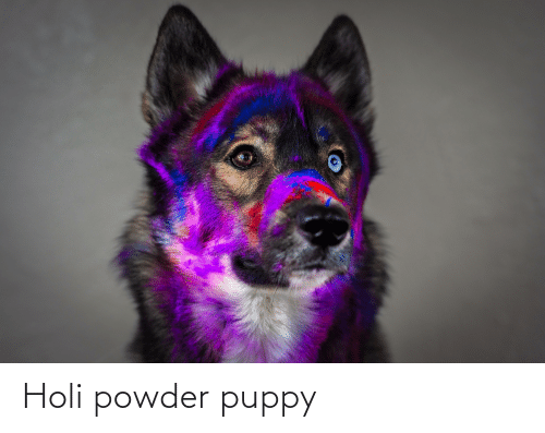 holi: Holi powder puppy