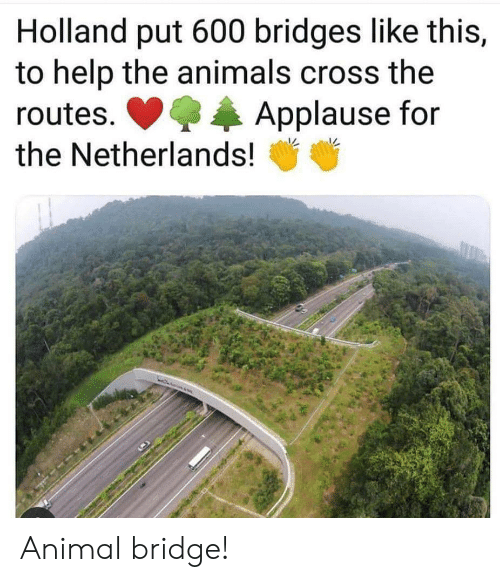 Netherlands: Holland put 600 bridges like this,  to help the animals cross the  Applause for  routes.  the Netherlands! Animal bridge!