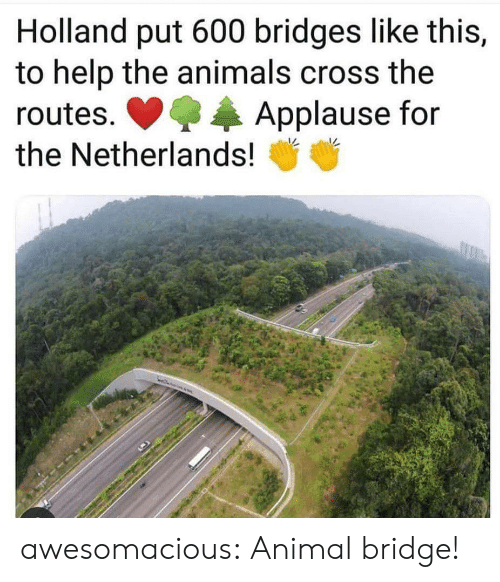 Netherlands: Holland put 600 bridges like this,  to help the animals cross the  Applause for  routes.  the Netherlands! awesomacious:  Animal bridge!