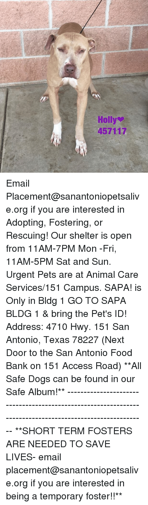 Dogs, Food, and Memes: Holly  457117 Email Placement@sanantoniopetsalive.org if you are interested in Adopting, Fostering, or Rescuing!  Our shelter is open from 11AM-7PM Mon -Fri, 11AM-5PM Sat and Sun.  Urgent Pets are at Animal Care Services/151 Campus. SAPA! is Only in Bldg 1 GO TO SAPA BLDG 1 & bring the Pet's ID! Address: 4710 Hwy. 151 San Antonio, Texas 78227 (Next Door to the San Antonio Food Bank on 151 Access Road)  **All Safe Dogs can be found in our Safe Album!** ---------------------------------------------------------------------------------------------------------- **SHORT TERM FOSTERS ARE NEEDED TO SAVE LIVES- email placement@sanantoniopetsalive.org if you are interested in being a temporary foster!!**