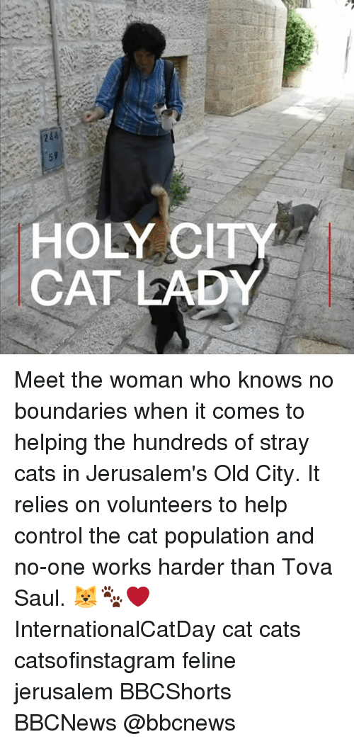 Cats, Memes, and Control: HOLY CIT  CAT LADY Meet the woman who knows no boundaries when it comes to helping the hundreds of stray cats in Jerusalem's Old City. It relies on volunteers to help control the cat population and no-one works harder than Tova Saul. 🐱🐾❤️ InternationalCatDay cat cats catsofinstagram feline jerusalem BBCShorts BBCNews @bbcnews