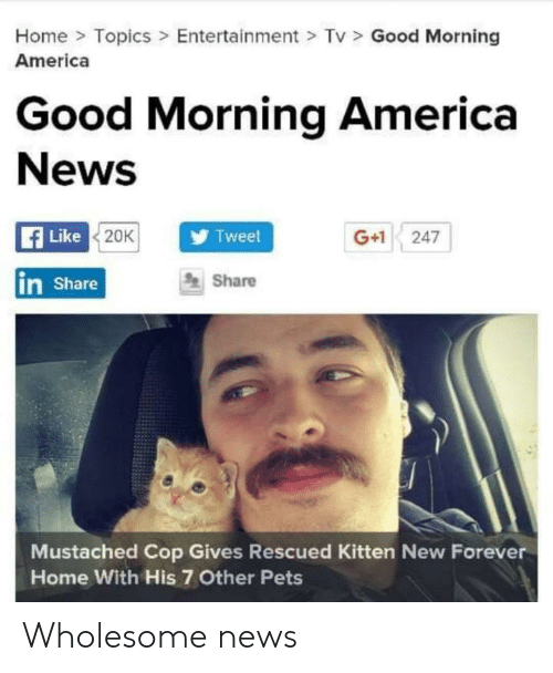 good morning good morning: Home> Topics> Entertainment > Tv  America  Good Morning  Good Morning America  News  Like  Tweet  G+1 247  20K  Share  in Share  Mustached Cop Gives Rescued Kitten New Forever  Home With His 7 Other Pets Wholesome news