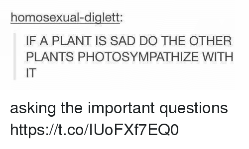 Memes, Sad, and Asking: homosexual-diglett  IF A PLANT IS SAD DO THE OTHER  PLANTS PHOTOSYMPATHIZE WITH  IT asking the important questions https://t.co/IUoFXf7EQ0