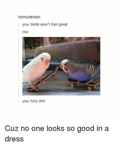Girl Memes: homuratrash:  you: birds aren't that great  me  you: holy shit Cuz no one looks so good in a dress