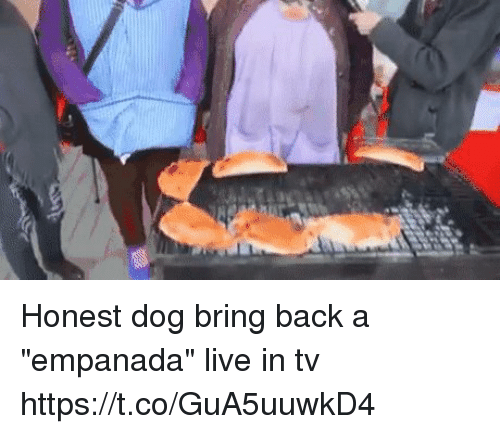 "dogging: Honest dog bring back a ""empanada"" live in tv https://t.co/GuA5uuwkD4"