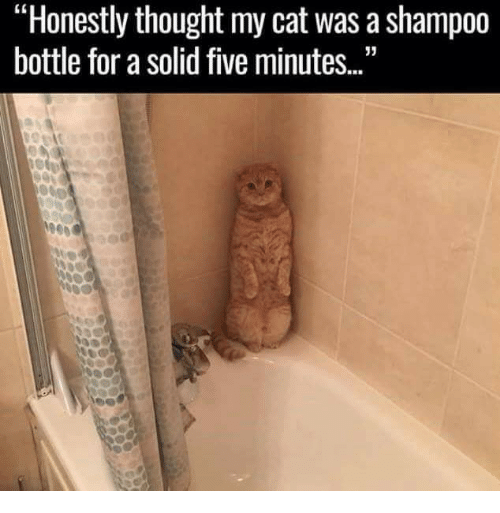 "Dank, Thought, and 🤖: ""Honestly thought my cat was a shampoo  bottle for a solid five minutes..."""