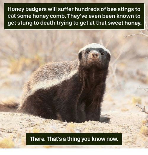 honey badgers: Honey badgers will suffer hundreds of bee stings to  eat some honey comb. They've even been known to  get stung to death trying to get at that sweet honey.  There. That's a thing you know now.