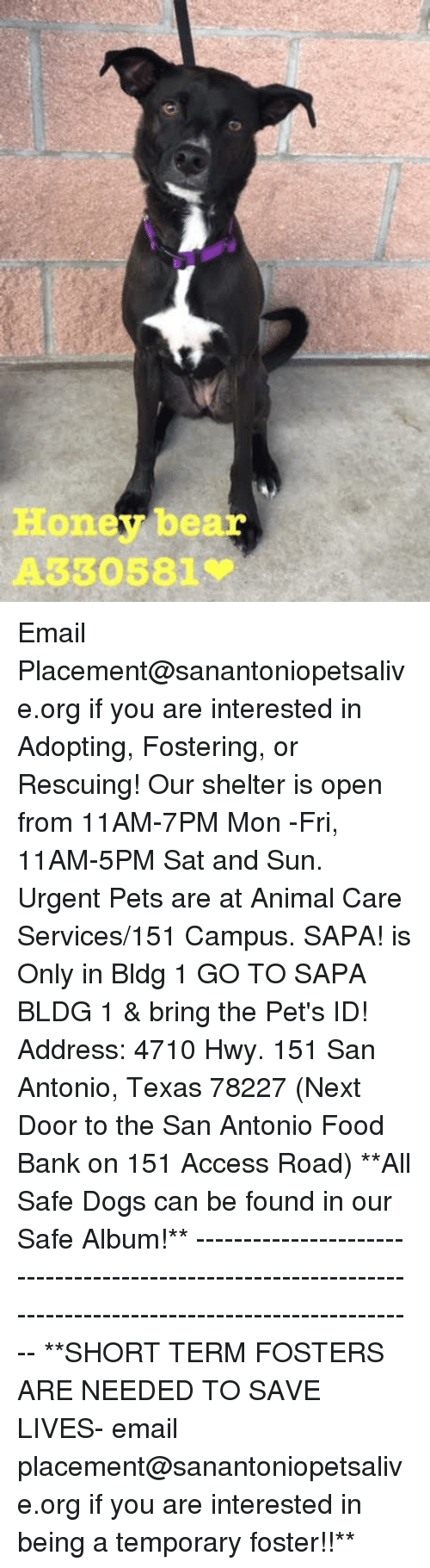 Dogs, Food, and Memes: Honey bear  A330581 Email Placement@sanantoniopetsalive.org if you are interested in Adopting, Fostering, or Rescuing!  Our shelter is open from 11AM-7PM Mon -Fri, 11AM-5PM Sat and Sun.  Urgent Pets are at Animal Care Services/151 Campus. SAPA! is Only in Bldg 1 GO TO SAPA BLDG 1 & bring the Pet's ID! Address: 4710 Hwy. 151 San Antonio, Texas 78227 (Next Door to the San Antonio Food Bank on 151 Access Road)  **All Safe Dogs can be found in our Safe Album!** ---------------------------------------------------------------------------------------------------------- **SHORT TERM FOSTERS ARE NEEDED TO SAVE LIVES- email placement@sanantoniopetsalive.org if you are interested in being a temporary foster!!**
