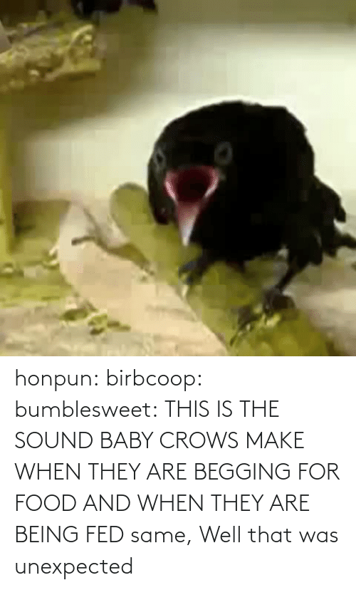 Begging For Food: honpun:  birbcoop:  bumblesweet:  THIS IS THE SOUND BABY CROWS MAKE WHEN THEY ARE BEGGING FOR FOOD AND WHEN THEY ARE BEING FED  same,  Well that was unexpected