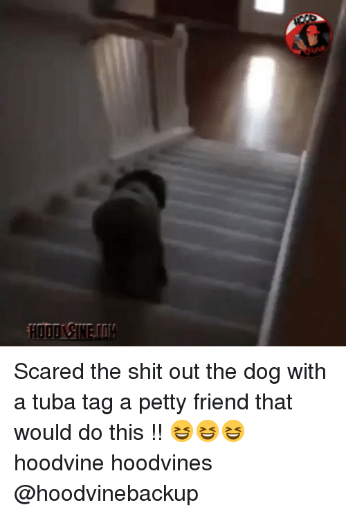 petty: HOOD CIN Scared the shit out the dog with a tuba tag a petty friend that would do this !! 😆😆😆 hoodvine hoodvines @hoodvinebackup