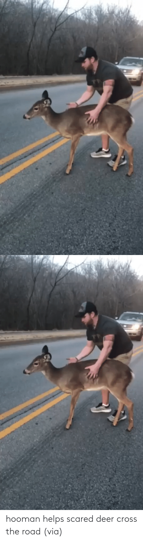 scared: hooman helps scared deer cross the road (via)