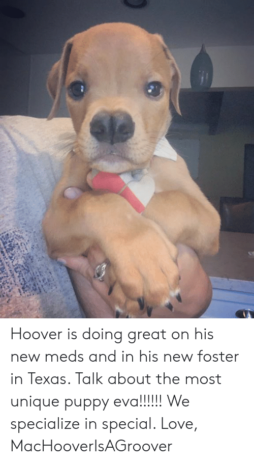 meds: Hoover is doing great on his new meds and in his new foster in Texas. Talk about the most unique puppy eva!!!!!! We specialize in special.   Love, MacHooverIsAGroover