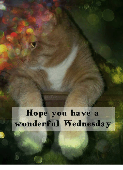 25+ Best Memes About Have a Wonderful Wednesday | Have a Wonderful Wednesday Memes