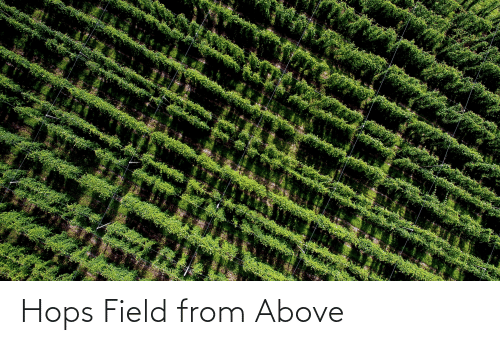 hops: Hops Field from Above