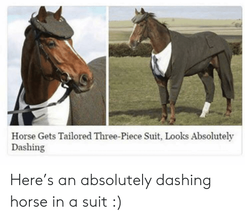 dashing: Horse Gets Tailored Three-Piece Suit, Looks Absolutely  Dashing Here's an absolutely dashing horse in a suit :)