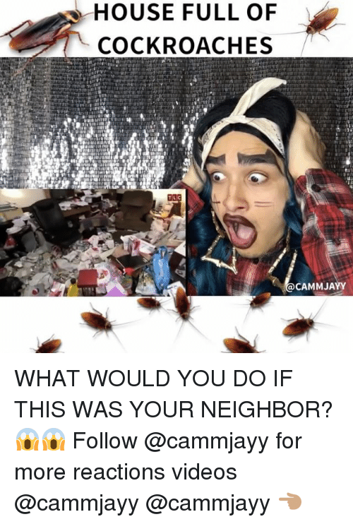 cockroaches: HOUSE FULL OF  COCKROACHES  CAMMJAYY WHAT WOULD YOU DO IF THIS WAS YOUR NEIGHBOR? 😱😱 Follow @cammjayy for more reactions videos @cammjayy @cammjayy 👈🏽