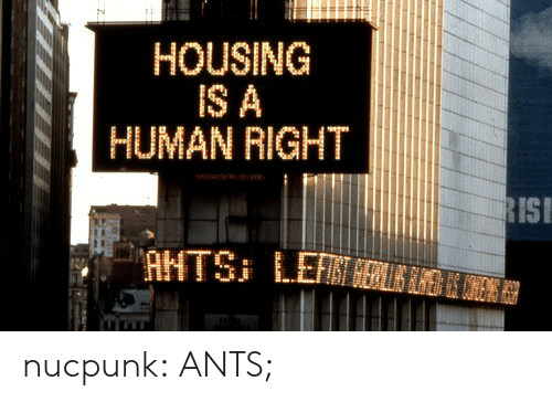 isi: HOUSING  IS A  HUMAN RIGHT  ISI nucpunk:  ANTS;