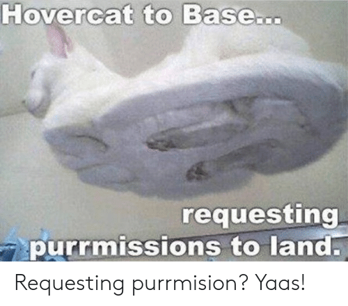 Yaas: Hovercat to Base...  requesting  purrmissions to land. Requesting purrmision? Yaas!
