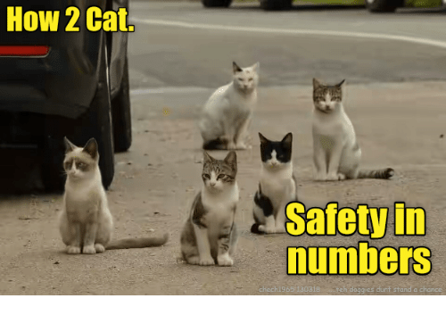 How, Cat, and Chance: How 2 Cat.  Safety in  numbers  chech1965 130318 eh doggies dunf stand a chance