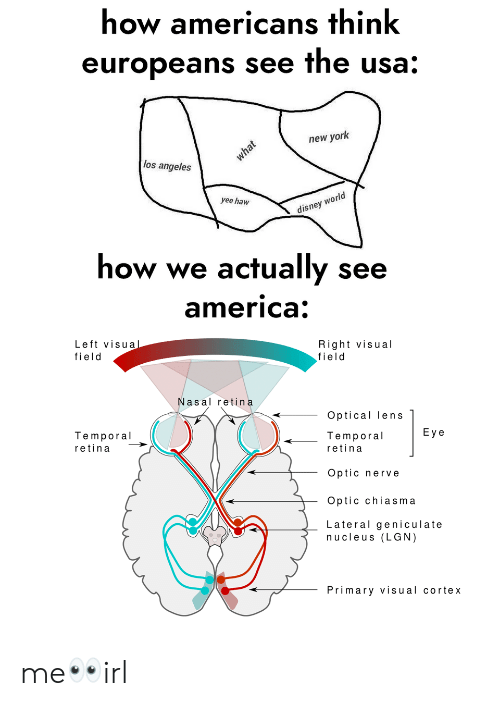 temporal: how americans think  europeans see the usa:  new york  los angeles  rld  yee haw  disney wo  how we actually see  america  Left visua  field  Right visual  field  Nasal retina  Optical lens  Temporal  Eye  Temporal  retina  retina  Optic nerve  Optic chiasma  Lateral geniculate  nucleus (LGN)  Primary visual cortex me👀irl