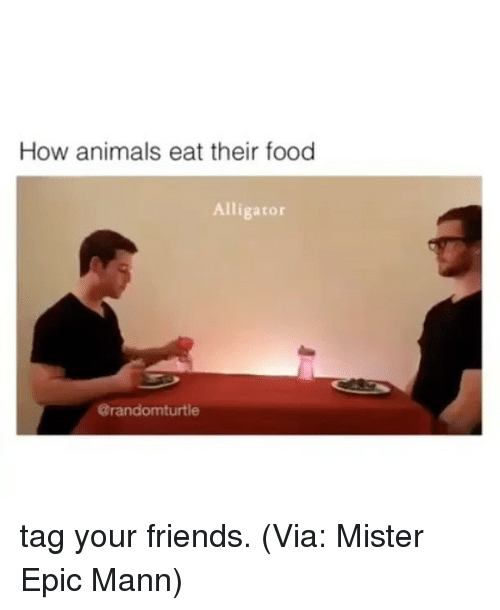 how animals eat their food: How animals eat their food  Alligator  Carandomturtle tag your friends. (Via: Mister Epic Mann)