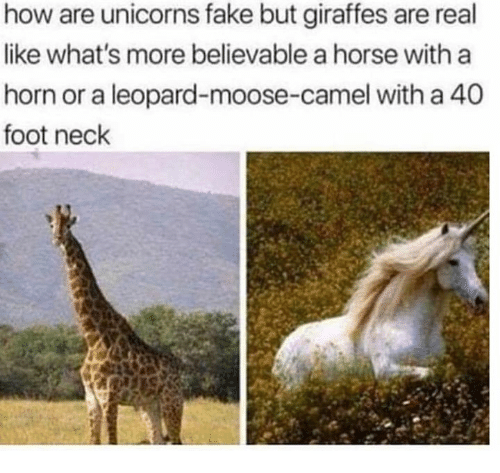 unicorns: how are unicorns fake but giraffes are real  like what's more believable a horse with a  horn or a leopard-moose-camel with a 40  foot neck