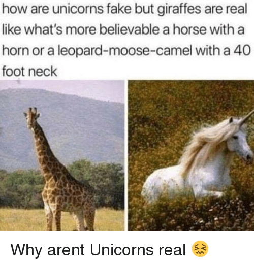 A 40: how are unicorns fake but giraffes are real  like what's more believable a horse with a  horn or a leopard-moose-camel with a 40  foot neck Why arent Unicorns real 😖
