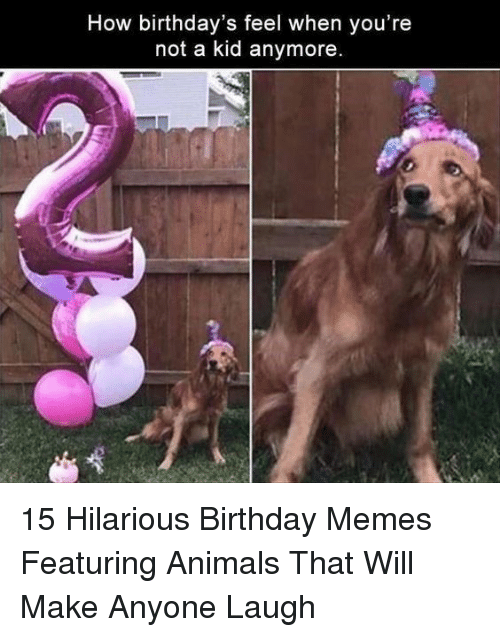 Birthday Memes: How birthday's feel when you're  not a kid anymore. 15 Hilarious Birthday Memes Featuring Animals That Will Make Anyone Laugh
