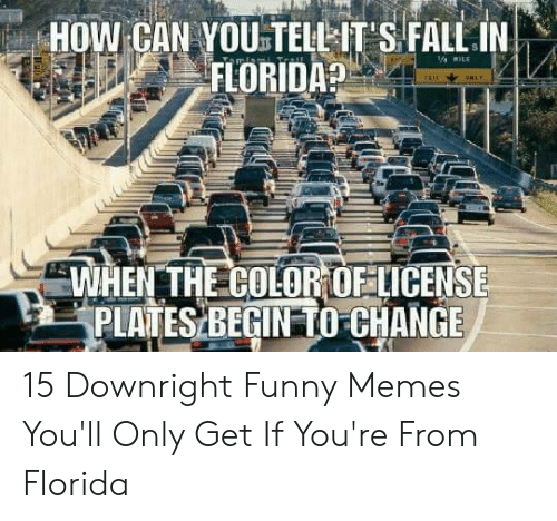 Fall In Florida: HOW CAN YOU TELL-IT S FALL IN  FLORIDA?  WİENTHECOLOROFLICENSE  PLATES BEGIN TO-CHANGE 15 Downright Funny Memes You'll Only Get If You're From Florida