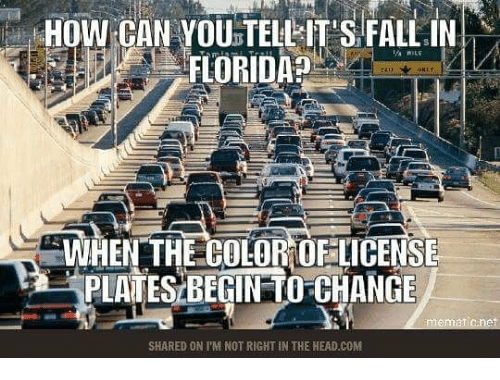 Fall In Florida: HOW CAN YOU TELLIT S FALL IN  FLORIDA  WHEN THE COLOR DFLICENSE  PLATES BEGIN TO-CHANGE  SHARED ON TM NOT RIGHT IN THE HEAD.COM