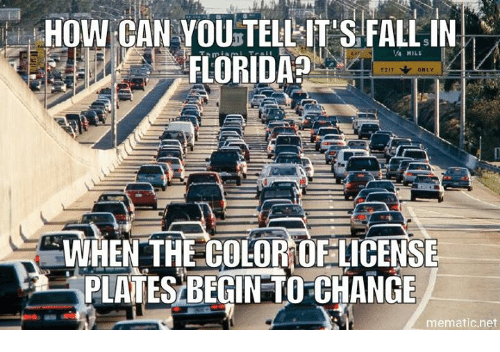 Fall In Florida: HOW CAN YOU TELLITES FALL IN  FLORIDA  WHEN THE COLOROFLICENSE  PLATESBEGIN TO CHANGE  mematic net