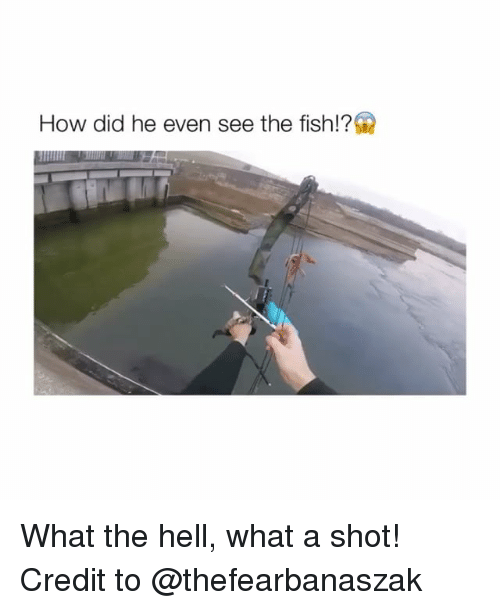 Fish, Credited, and Hell: How did he even see the fish!? What the hell, what a shot! Credit to @thefearbanaszak