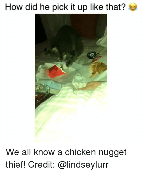 We All Know A: How did he pick it up like that? We all know a chicken nugget thief! Credit: @lindseylurr